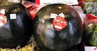 Dünyanın en pahalı meyvesi olan Densuke karpuzu, 2 bin dolara satıldı