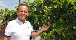 Antalya'da yetiştirilen tropikal meyveler ünlü isimlerden yoğun talep görüyor