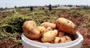 TZOB Genel Başkanı Şemsi Bayraktar: Soğan, patates ve limon üreticisi sıkıntıda