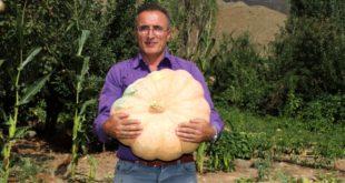 Hakkarili çiftçi, 45 kilo ağırlığında kabak yetiştirdi