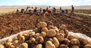 Niğde'li patates üreticileri isyan etti: AKP pilimizi bitirdi