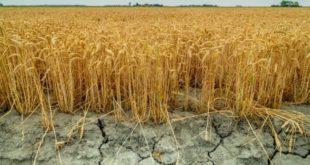 Çiftçi'nin borçları arttı
