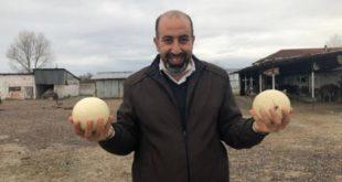 Lübnan'lı profesör Sakarya'ya deve kuşu çiftliği kurdu