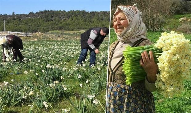 nergis-ureticisi-isyanda-bizden-4-lira-90-kurusa-aldilar-istanbul-da-60-liraya-satiyorlar-831476-1.