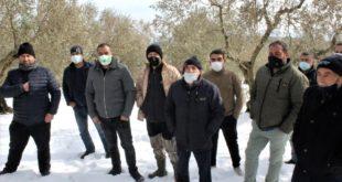 Zeytin ağaçları don hasarına maruz kalan köylüler devletten destek bekliyor