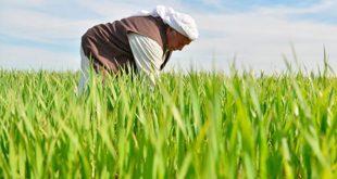 Borç ve haciz yükü altında ezilen çiftçiyi gören yok