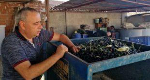 CHP 'li vekil Bakırlıoğlu: Zeytinyağında ithalat serbest, ihracat yasak