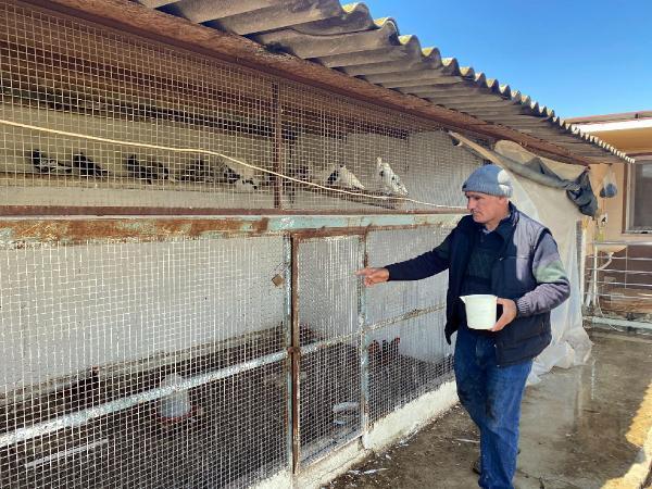 İran tavuğundan 'paskalya yumurtası' üretiyor! Tanesi 7 liradan kapış kapış satılıyor
