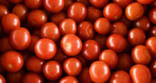 Rusya Tarım Bakanlığı 'ndan Türkiye'den domates ithalatının yüzde 20 artırılması önerisi