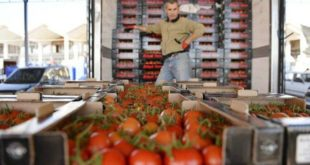 Rusya 'ya domates kotası doluyor