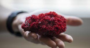 Aktarlarda satılan 'kardeş kanı' bitkisi, hayati tehlikeye yol açabilir